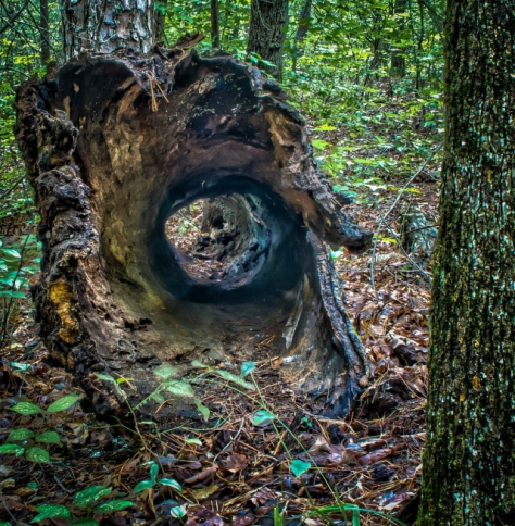 This is a shot through the end of a hollow log.